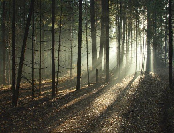Сочинские спасатели на носилках вынесли женщину из леса