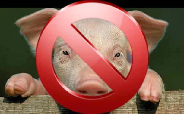 Вспышку вируса африканской свиной чумы зафиксировали в Краснодарском крае