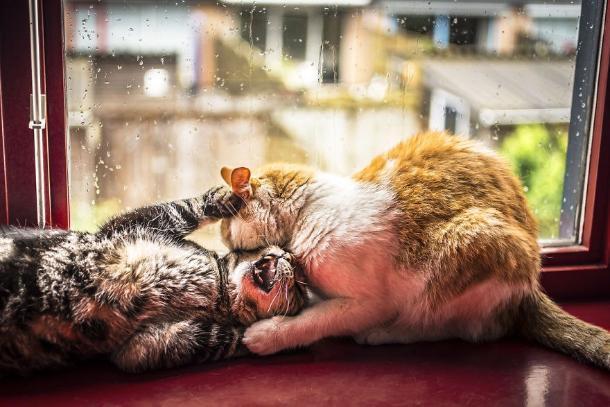 Дождь и мокрый снег ожидаются 7 декабря на Кубани