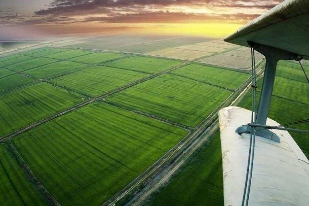 На Кубани впервые в истории собрали 1 млн тонн риса