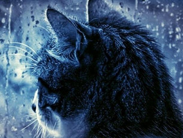 Сегодня, как и в ближайшие три дня, в Краснодаре дождливо