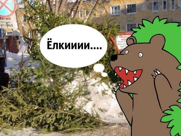 Кому нужны «использованные» елки Краснодара?