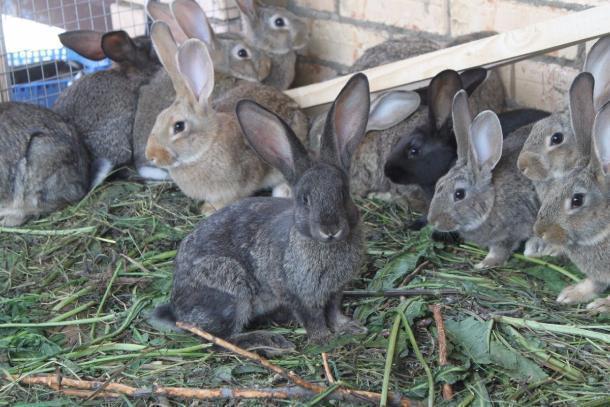 Жительница Пермского края предстанет перед судом закражу 6-ти кроликов вНовороссийске
