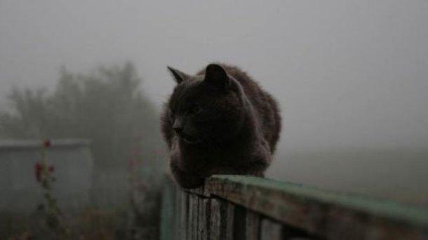 Последний рабочий день недели на Кубани будет туманным и обещающим потепление