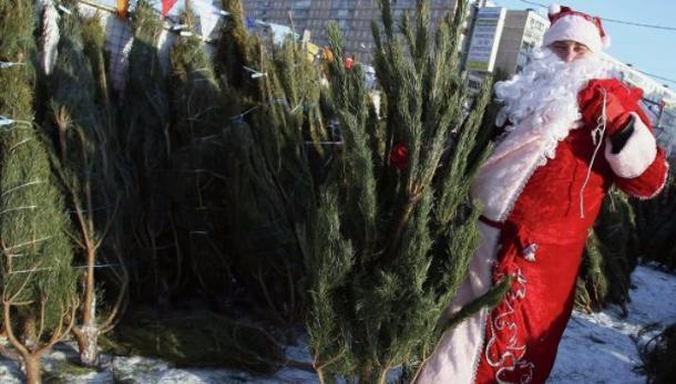 Елочные базары раскроются вКраснодаре 1декабря