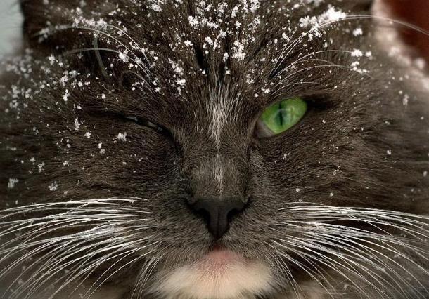 Дождливо и снежно будет 13 января на Кубани