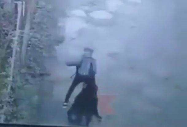 Огромная собака напала на ребенка под Краснодаром