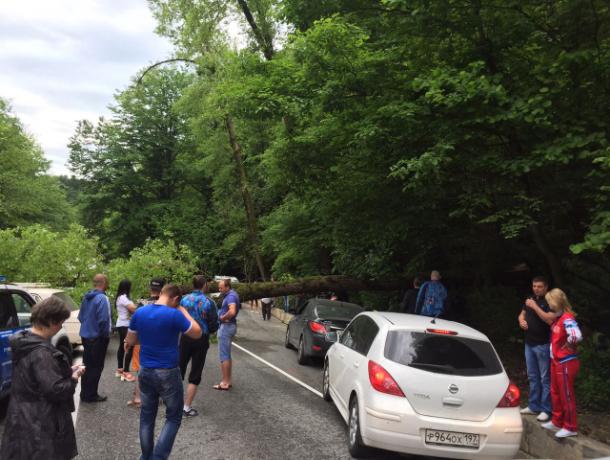 Под Сочи упавшее дерево заблокировало въезд в город