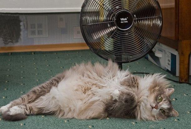 Дикая жара: температура на Кубани может подняться до +40