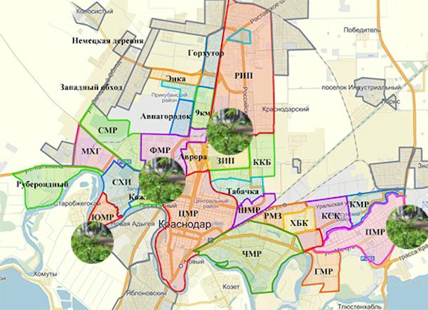 «Карта позора Краснодара»: где разрослась амброзия