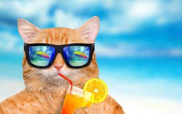 Ах, это лето на Кубани: палящее солнце и высокая температура не пожалеют никого