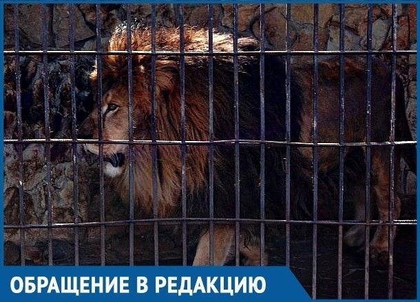 Не царское отношение ко льву вызвало возмущение краснодарцев