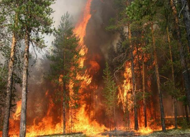 Лесные пожары в Краснодарском крае контролируют с помощью беспилотников и морских катеров