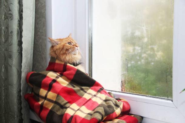 В последний выходной перед рабочей неделей на Кубани будет дождливо