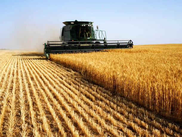 Губернатор Краснодарского края выделил семь млрд. руб. наподдержку аграриев