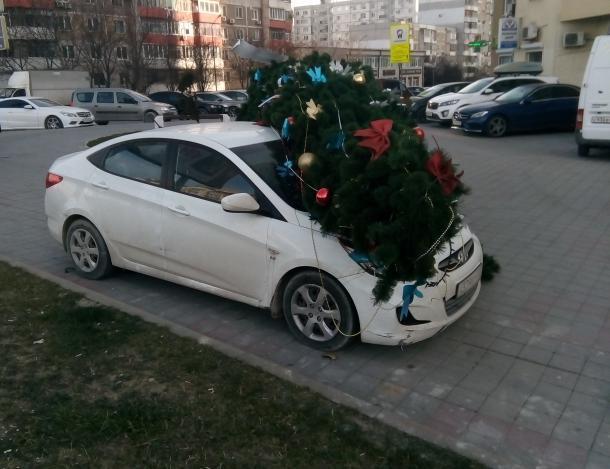«И полетели елки!» - в Новороссийске продолжает бушевать ветер