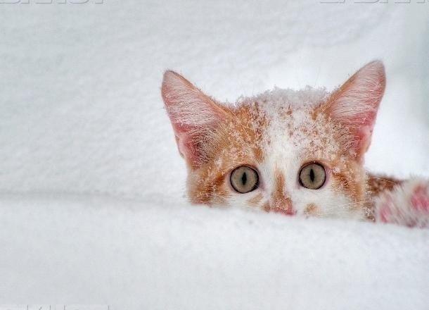 Ввыходные наКубани ожидаются 20-градусные морозы