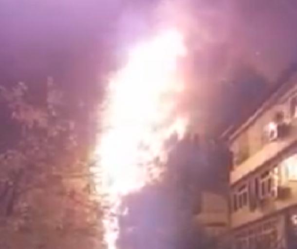 Малолетние поджигатели пальмы в Сочи сбежали с места преступления