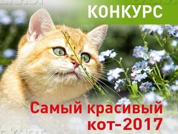 Прием заявок на участие в конкурсе «Самый красивый кот-2017» завершился