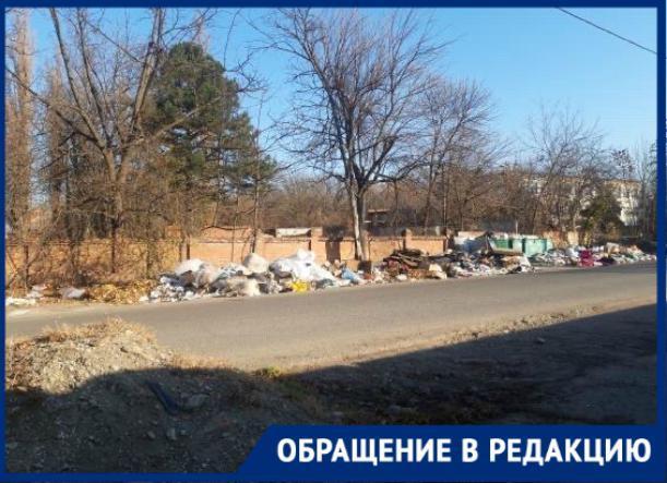 Стаи бродячих собак около разрастающейся свалки пугают жителей Краснодара