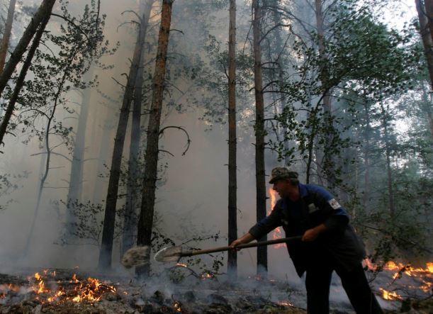 Пожар произошел в районе лесопарка «Красный Кут» в Краснодаре