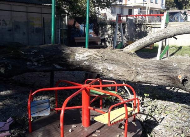 Огромное дерево рухнуло на детскую площадку в Сочи
