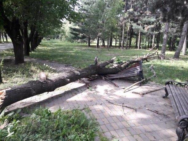 Упавшее дерево разломало лавочку в краснодарском парке