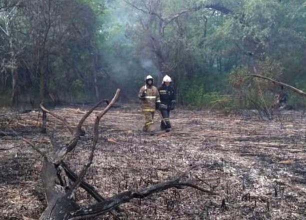 Доброволец пожаловался на беспомощность спасателей при пожаре на Большом острове в Краснодаре