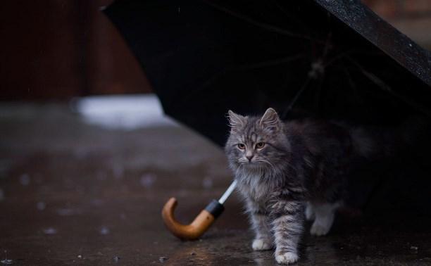 8 Марта в Краснодарском крае испортят дожди