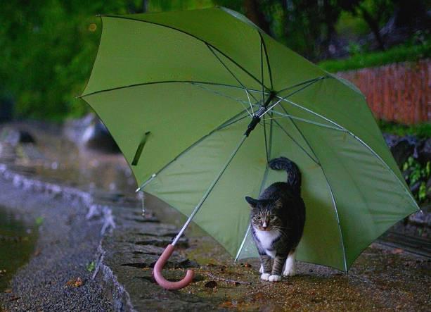Дожди не уходят из Краснодарского края