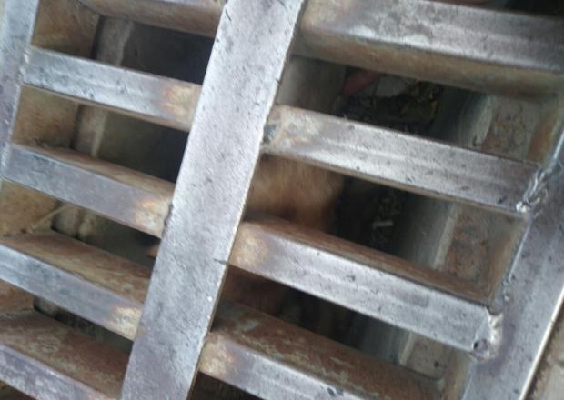 Новороссийцы спасли застрявшую в канализации собаку