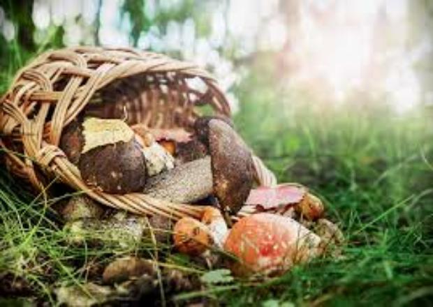 В Краснодарском крае двое детей отравились грибами