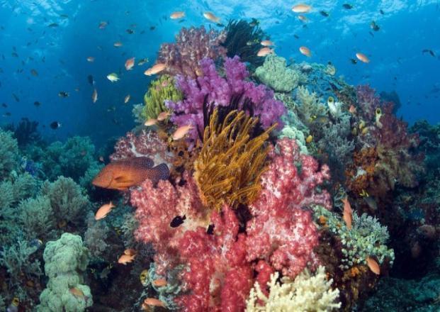 В Черном море от Сочи до Крыма создадут искусственные рифы