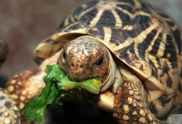 Черепахи принесли Краснодару место в Топе