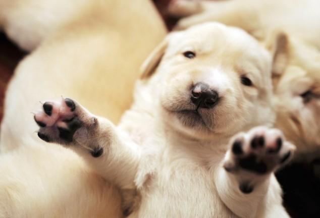 Каратель на «Ладе» жестоко расправился с щенками в станице Саратовской