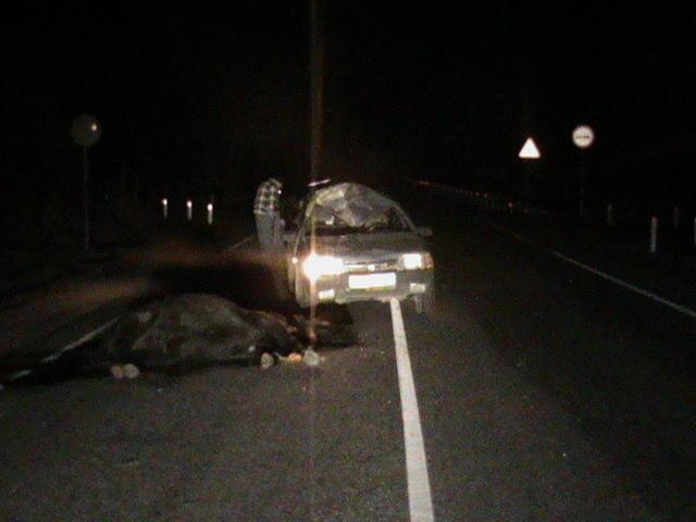 В Краснодарском крае водитель «Лады» насмерть сбил лошадь