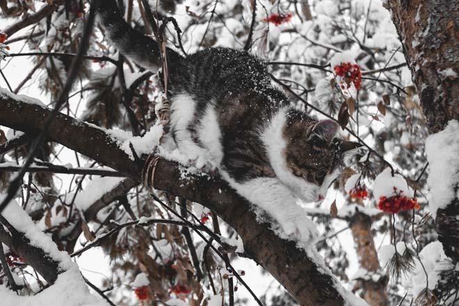 Из-за опасности налипания мокрого снега на Кубани объявили экстренное предупреждение