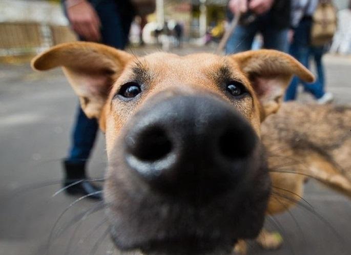Нет приютов, нет законов — проблему бродячих собак обсудили в Краснодаре