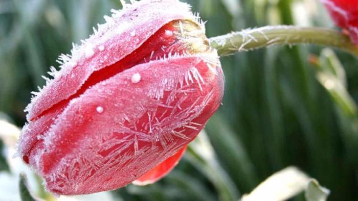 Экстренное предупреждение МЧС: в Туапсинском районе ожидаются заморозки
