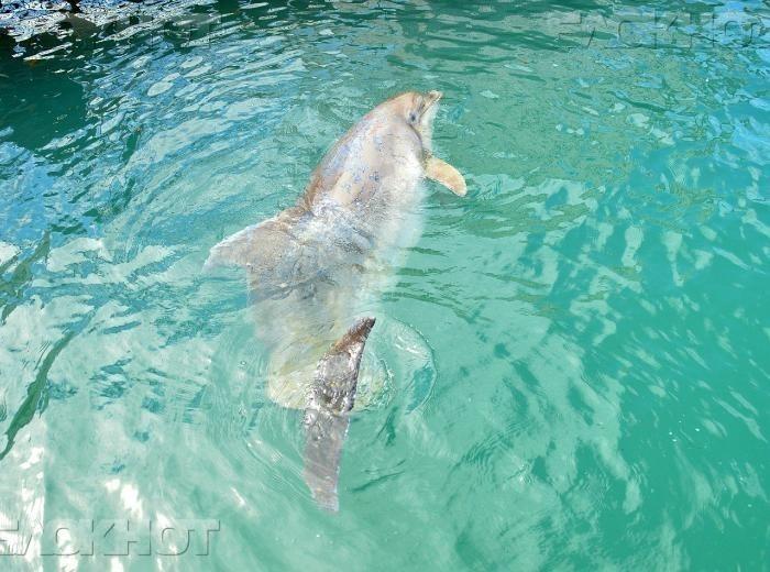 Ветеринары узнали причину смертельной болезни дельфина Зевса
