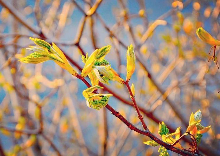 Очередное потепление грозит Краснодарскому краю