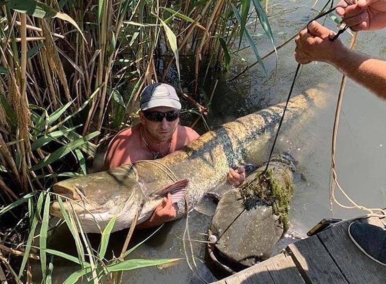 Огромные сомы в реке напугали и восхитили жителей Кубани