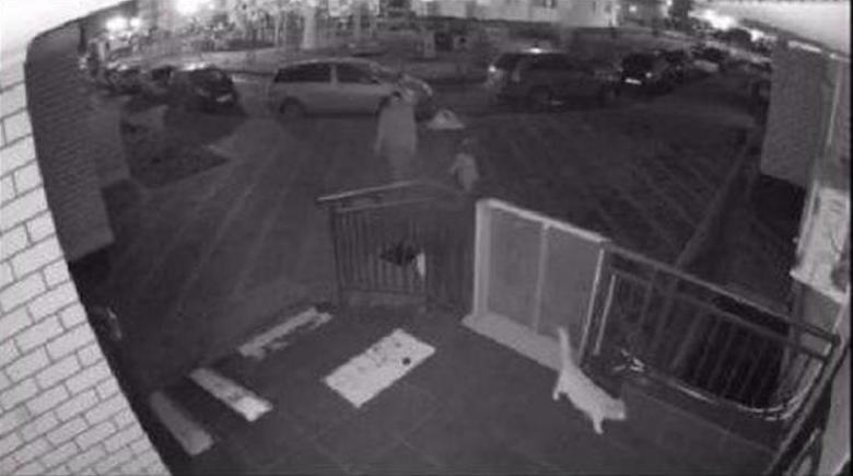 Жестокая расправа над котом в Краснодаре попала на камеру
