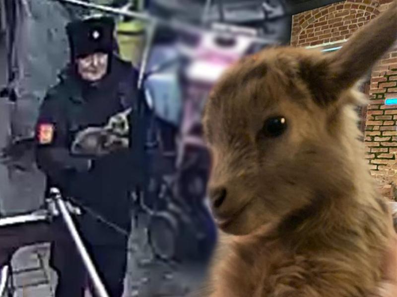 Казак вынес породистого козла из зоопарка и повез к теще: в «уголовке» отказано