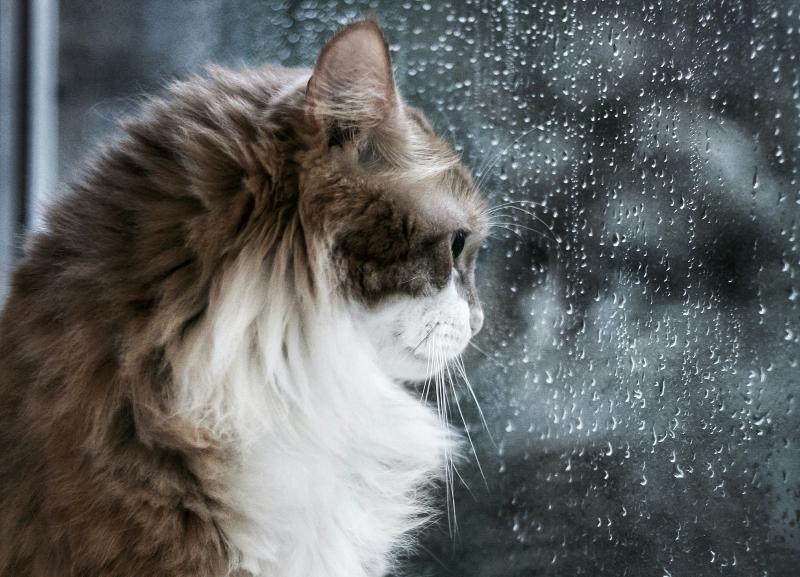 Синоптики обещают возвращение дождей на Кубань