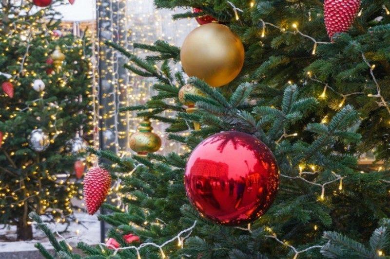 Жителям Кубани рассказали, как правильно выбрать елку к Новому году
