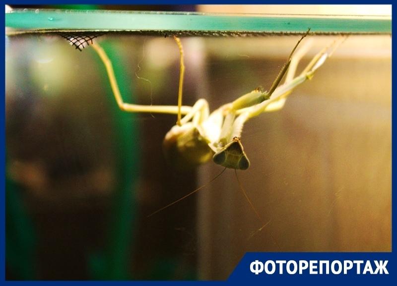 Выставка экзотических «пришельцев» в Краснодаре получила популярность