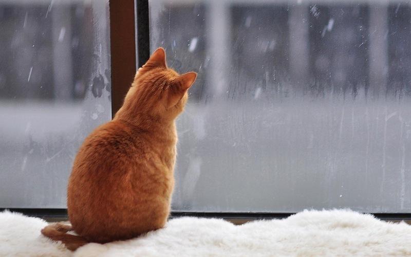 На Кубани пройдут кратковременные дожди