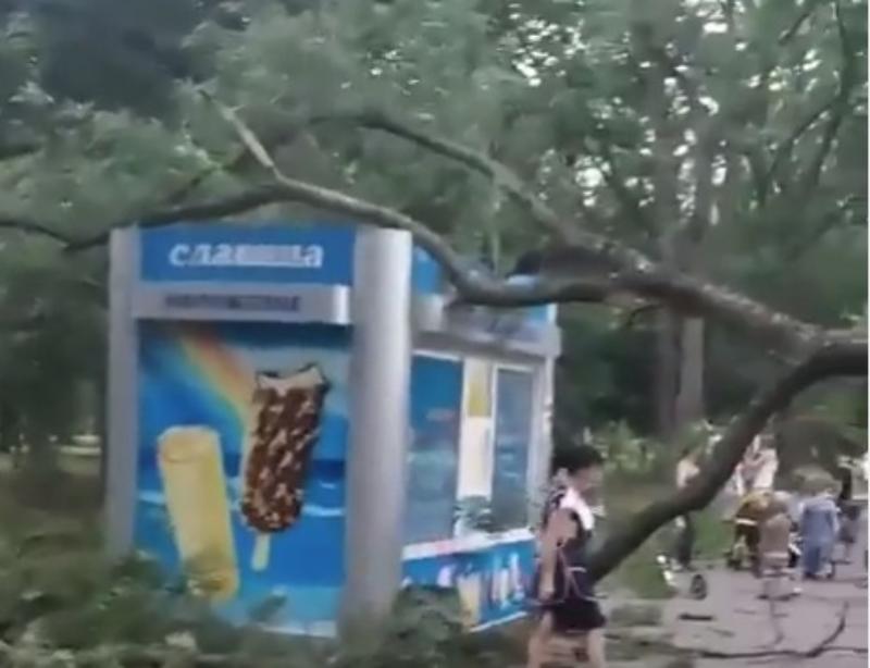 Огромное дерево упало на ларек с мороженым в парке Краснодара