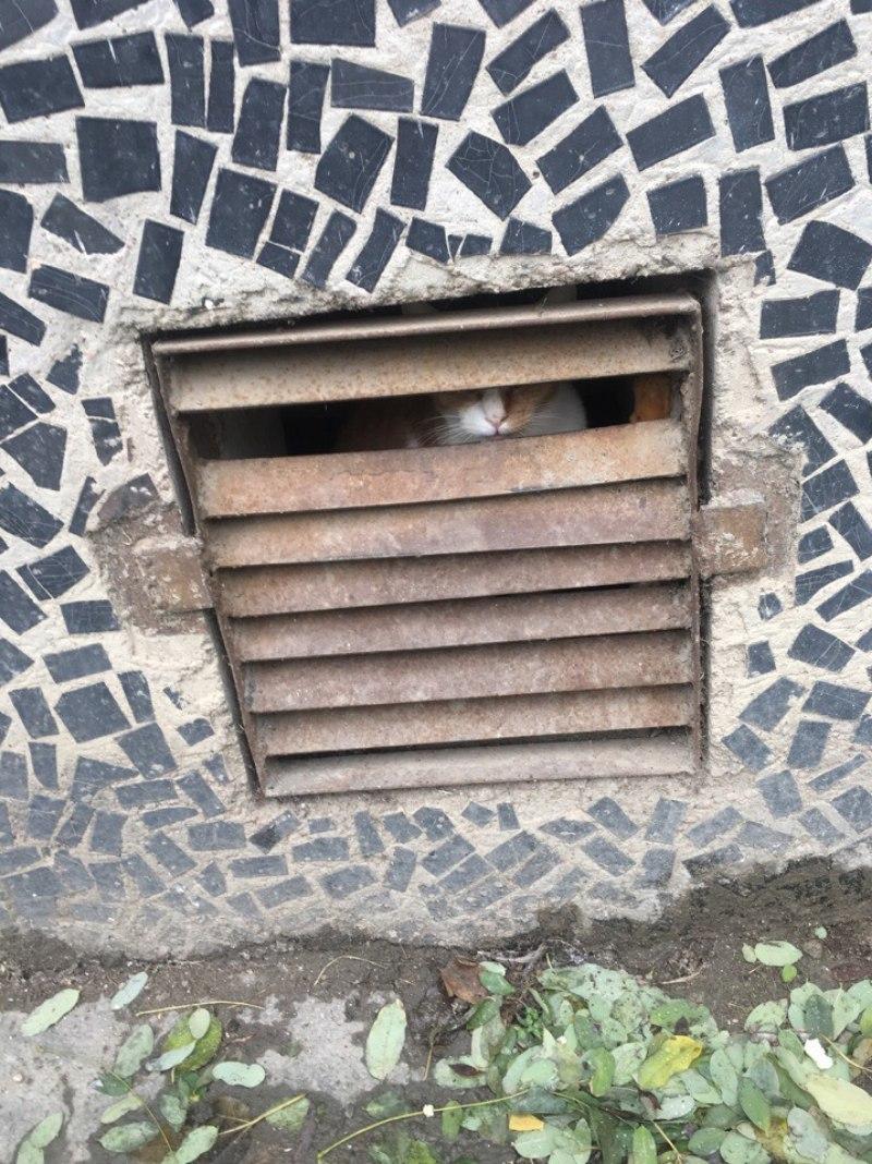 Жители Краснодара пытаются спасти еще одну замурованную в подвале многоэтажки кошку